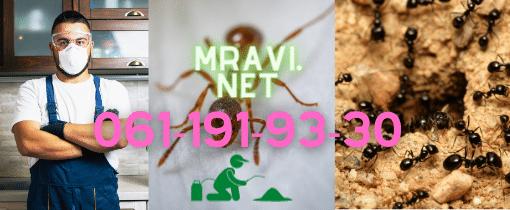 Kompletna regulacija svih vrsta sitnih žutih kuhihjskih mrava.Suzbijanje i trajna regulacija crnih standardnih baštovanskih mrava.Regulacija i trajno uništavanje letećih mrava.Biorazgradivi preparati na bazi dehidratacije bezbedni za decu,kućne ljubimce i starije ukućane i upošljenike.Pismena garancija i račun svakom kupcu.Preko 12+ godina rada i preko 9000+ Klijenata do sada od 2011 e godine dovoljan su razlog da nam poklonite poverenje.Edukovano sertifikovano starije iskusno radno osoblje koje dolazi da reši problem od početka do kraja.